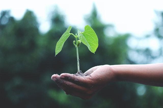 Reduce your Carbon footprint - Add Window film